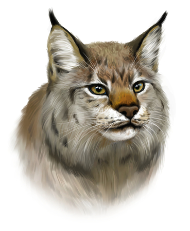 animal heads: Lynx