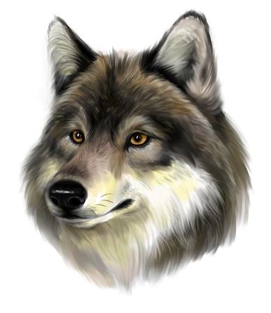 狼顔 写真素材