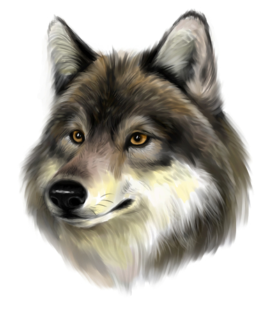 Wolf face photo