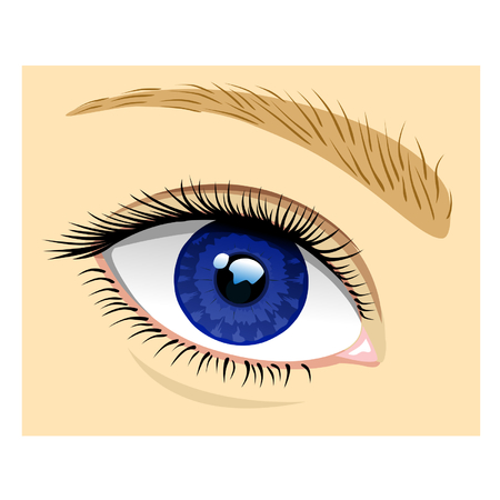 bodypart: Healthy eye Illustration