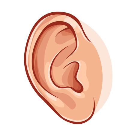 人間の耳  イラスト・ベクター素材