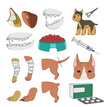 bandage: Veterinary illustrations