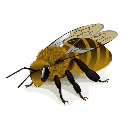 apiculture: Bee