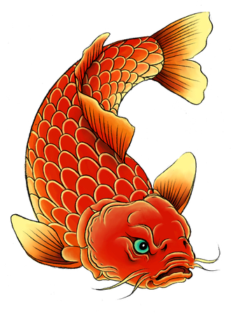 pez carpa: Carpa asiática tradicional en el fondo blanco.