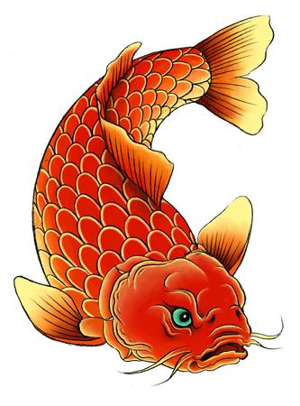 koi fish art: Traditional asian carp on the white background.