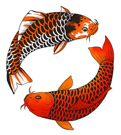 pez carpa: Dos carpas asiáticas