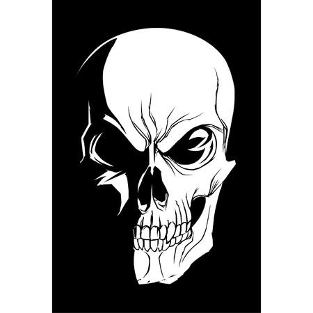 calavera: Cráneo en la oscuridad