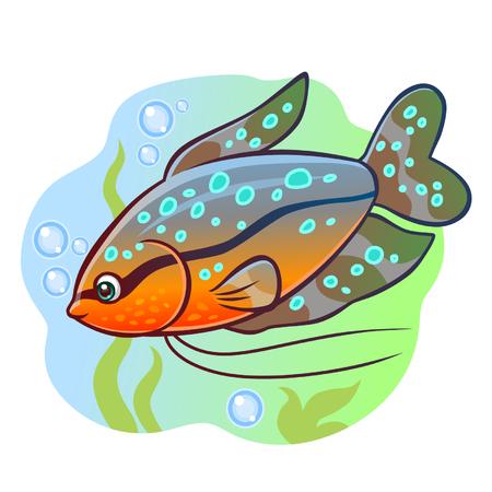 vector fish: Aquarium fish gourami