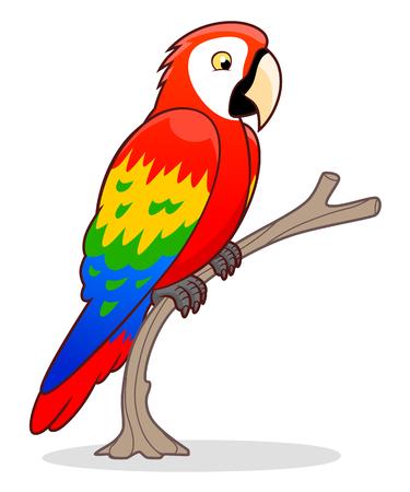 ara: Cartoon Ara parrot