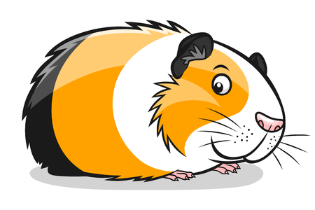 domestic animals: cartoon guinea pig