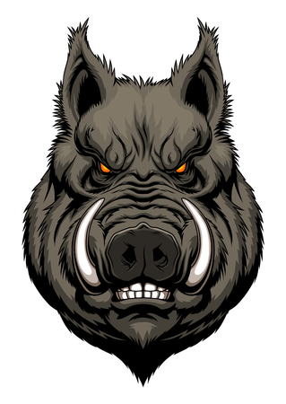 swine: Angry boar head Illustration