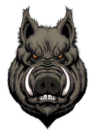 sanglier: tête de sanglier en colère