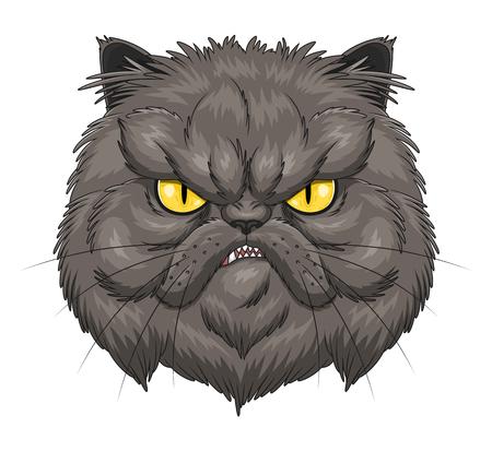 persian cat: Angry Persian cat face