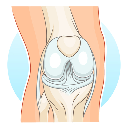alfa: Human knee-joint vector illustration. Illustration