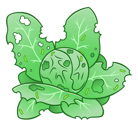Cabbage worm damage