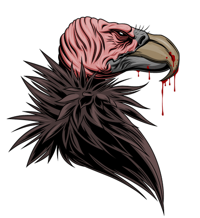 Vulture portrait