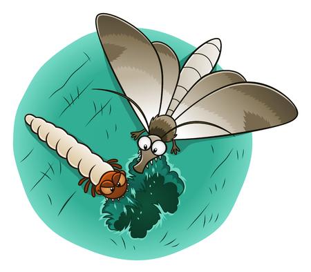 Moth and larva eating woolen cloth