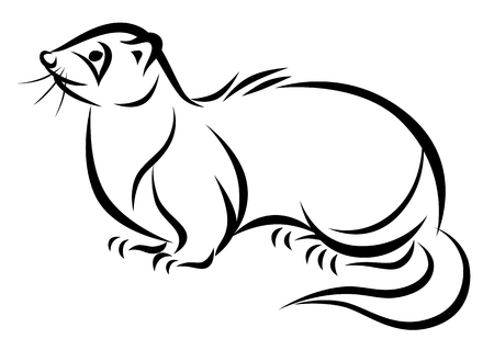Line drawing of a ferret