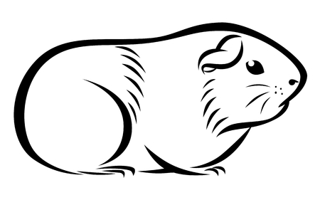 Line drawing of a guinea pig