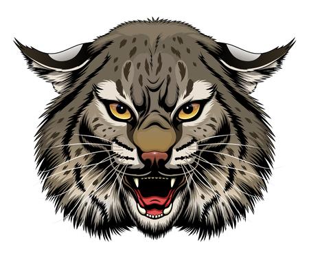 Angry bobcat head