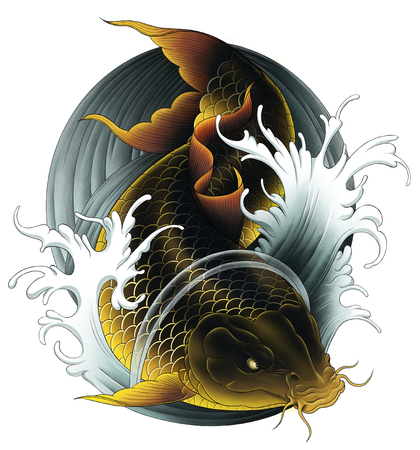 黒鯉 写真素材