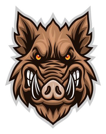Wild boar head front