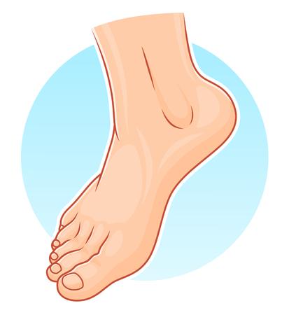 Menselijke voet illustratie Stock Illustratie