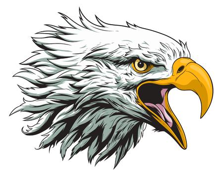 Weißkopfseeadlerkopf