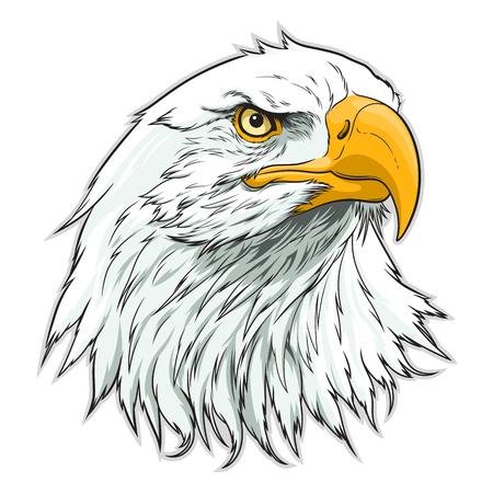 Cabeza de águila americana