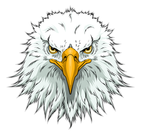 Bald eagle head front Illustration
