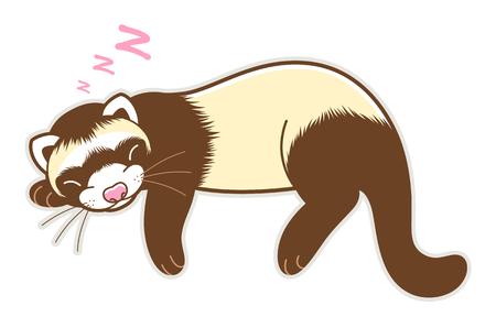 Cute sleeping ferret isolated Stock Illustratie