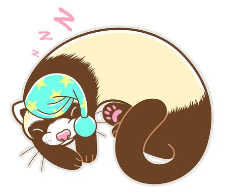 Sleeping cute ferret