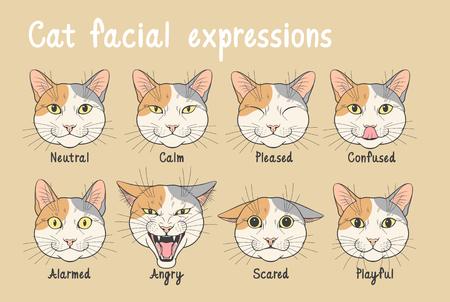 Domestic cat facial expressions Stock Illustratie
