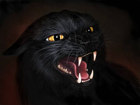 Angry black cat Stockfoto