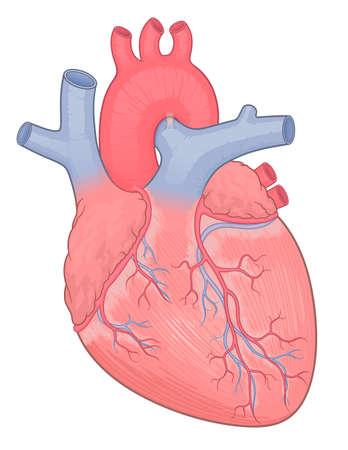 Heart medical vector illustration