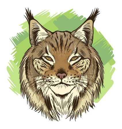 Bobcat head Illustration