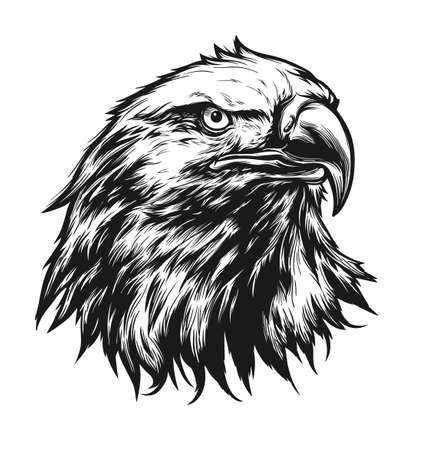 American bald eagle head digital ink drawing Illustration