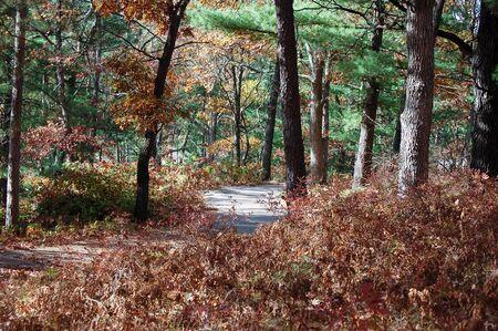 woodsy: Woodsy shadowy trail Stock Photo