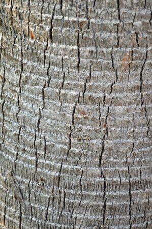 palmetto: Palmetto Tree Bark Texture