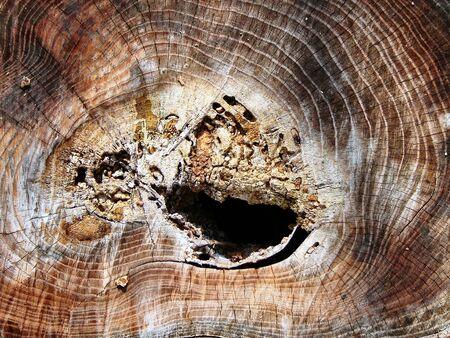 Texture Tree Rings
