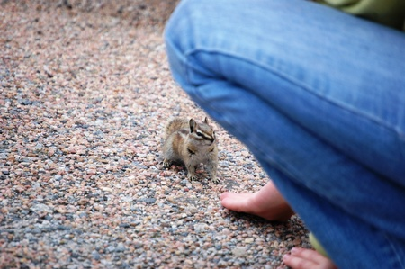 Chipmunk looks to person for food