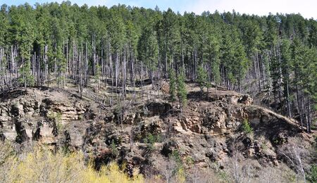 Deadwood Trees on a hill photo
