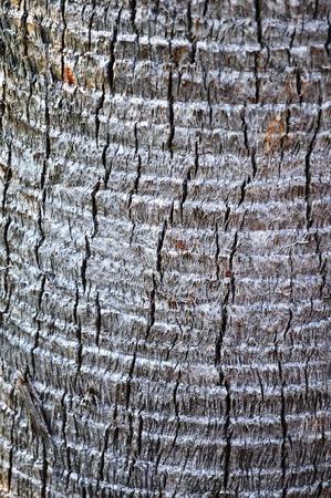 palmetto: Palmetto Tree Trunk background