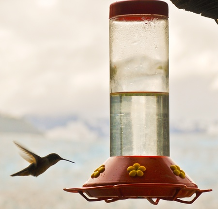Hummingbird approaches feeder
