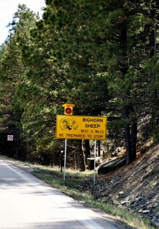 sheep road sign: Bighorn Sheep Crossing sign2