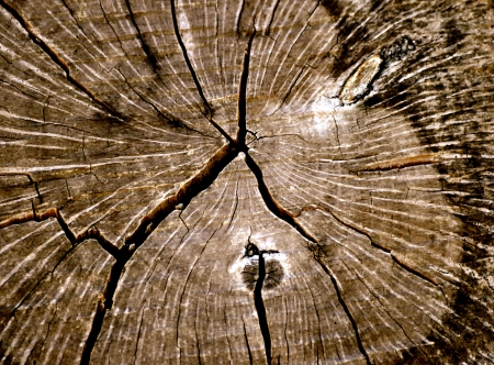 Textuur Tree Rings Stockfoto