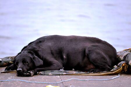 Dog sleeps on edge of lighthouse