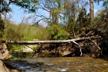 trunk  tree: Tree Trunk Bridge