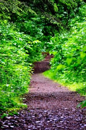 woodsy: Woodsy Trail