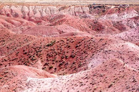 Petrified Forest Landscape photo